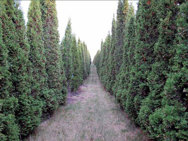 Hedgerow-Farm-24