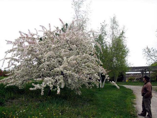 Hedgerow-Farm-25